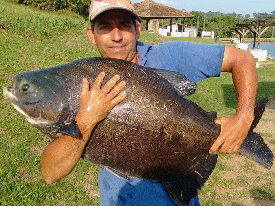 Pescador05