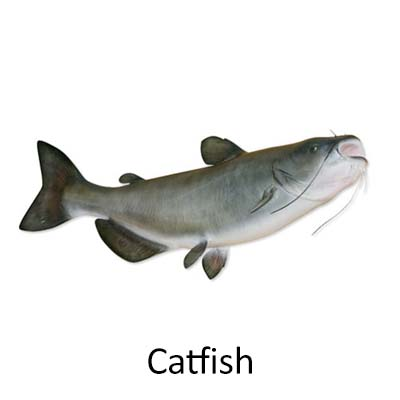 Catfish - Cópia