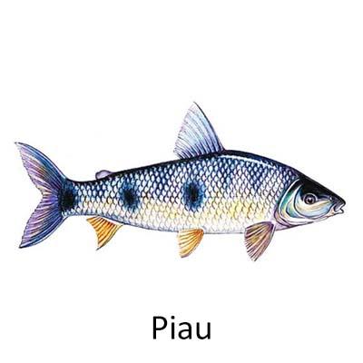 Piau - Cópia